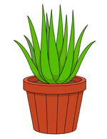 Mother In Laws Tongue Or Snake Plant In -Mother In Laws Tongue Or Snake Plant In Planter Clipart Size: 84 Kb-4