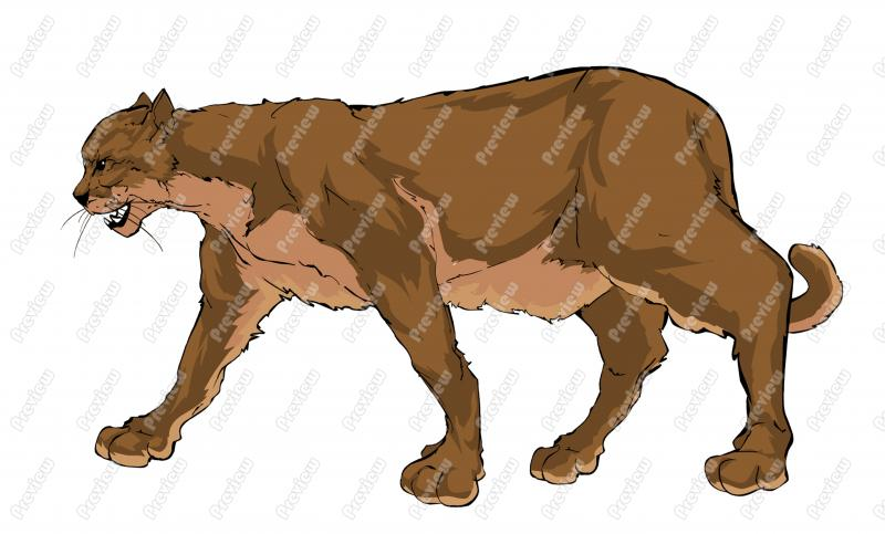 Mountain Lion Cartoon Clip Art