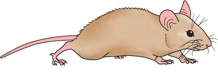 Mouse Clipart-mouse clipart-11