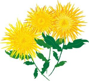 Mum Flower Clip Art Http Www  - Chrysanthemum Clip Art