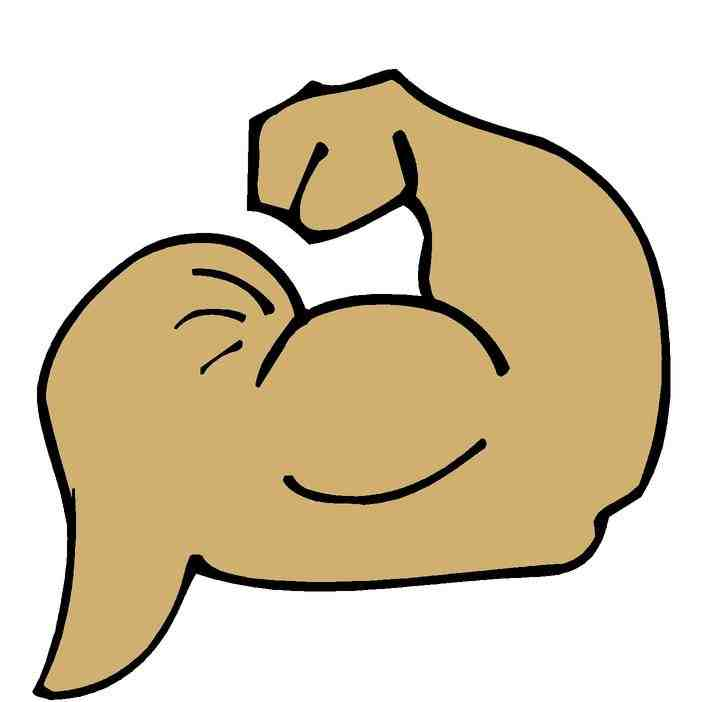 muscle clipart