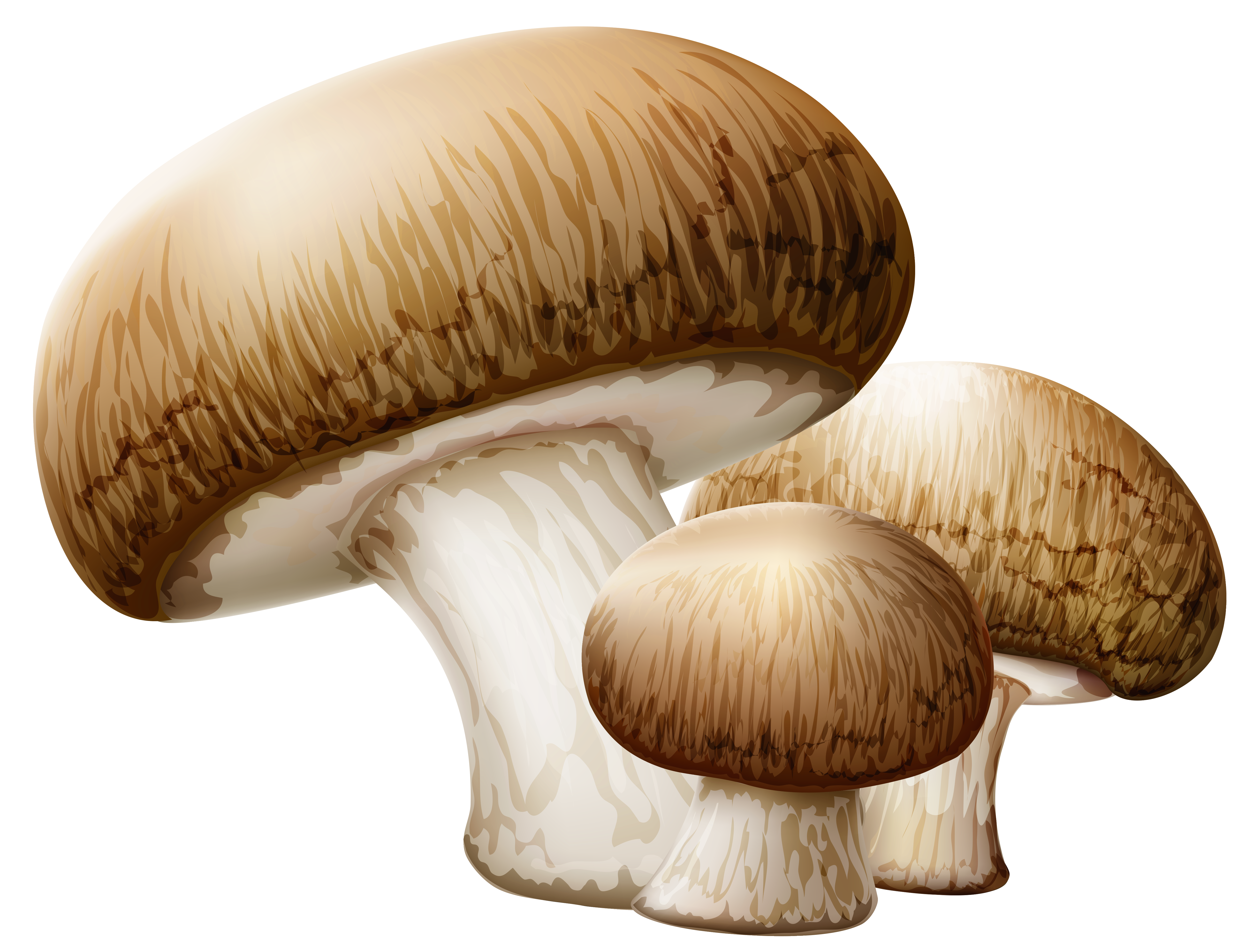 Mushrooms PNG Clipart Picture