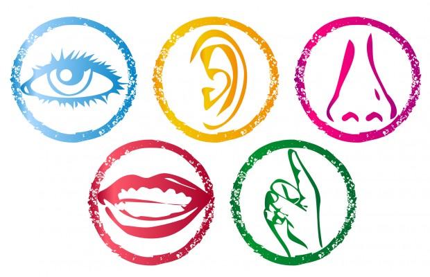 My Five Senses. Clipart Info