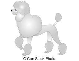 ... nice poodle insulated on white - illustration nice poodle... ...