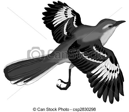 Northern Mockingbird - Mimus Polyglottus-Northern Mockingbird - Mimus polyglottus-14