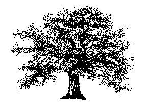 Oak-oak-8