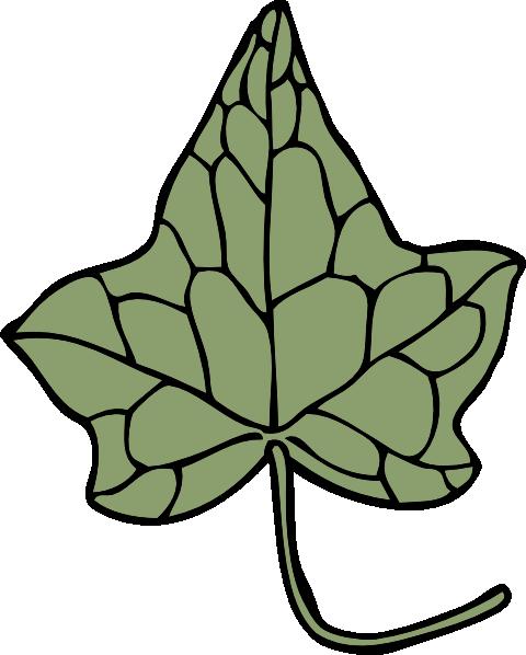 Oak Ivy Leaf Clip Art At Clker Com Vector Clip Art Online Royalty