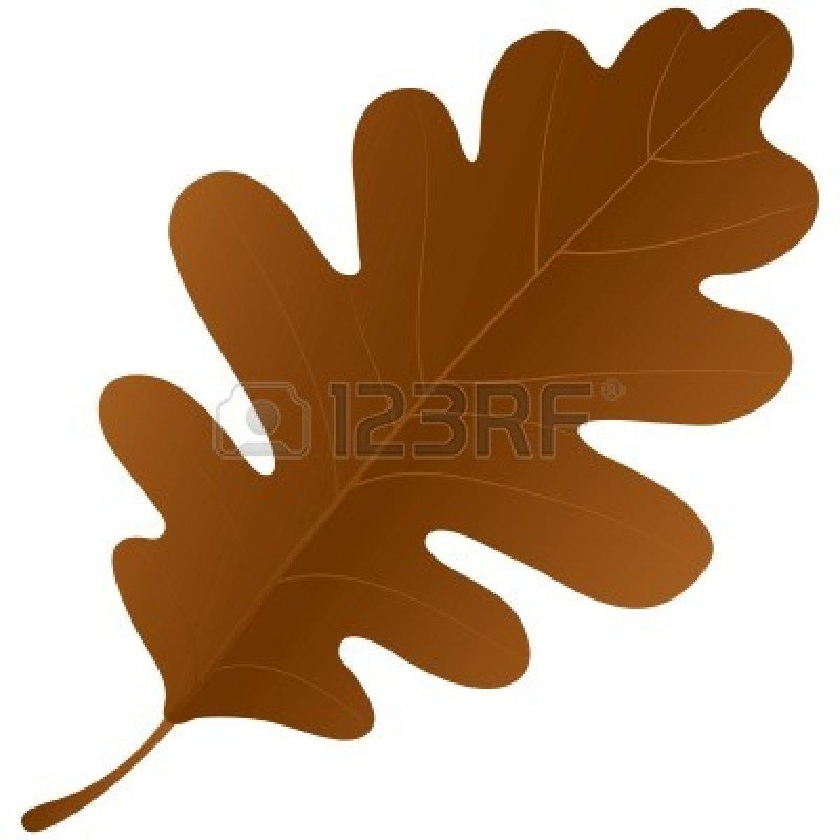 Oak Leaf Autumn Oak Leaf