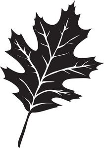 Oak leaves, Clipart images and .