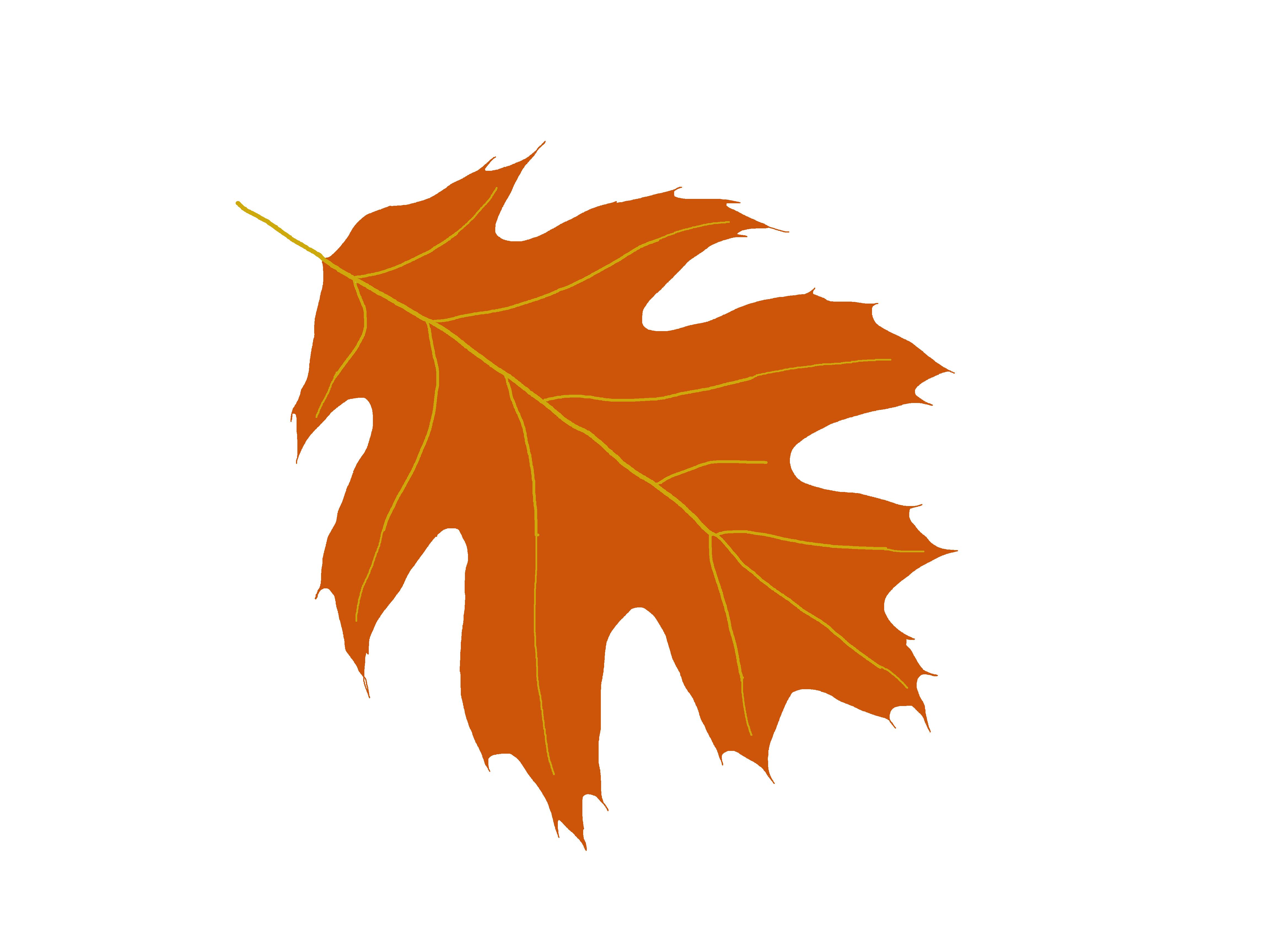 Oak tree leaf clipart - .