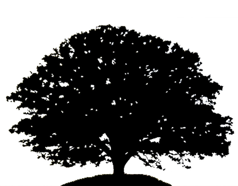 Oak Tree Silhouette 23090834 Maple Tree -Oak Tree Silhouette 23090834 Maple Tree With Leaves And Grass Black-15