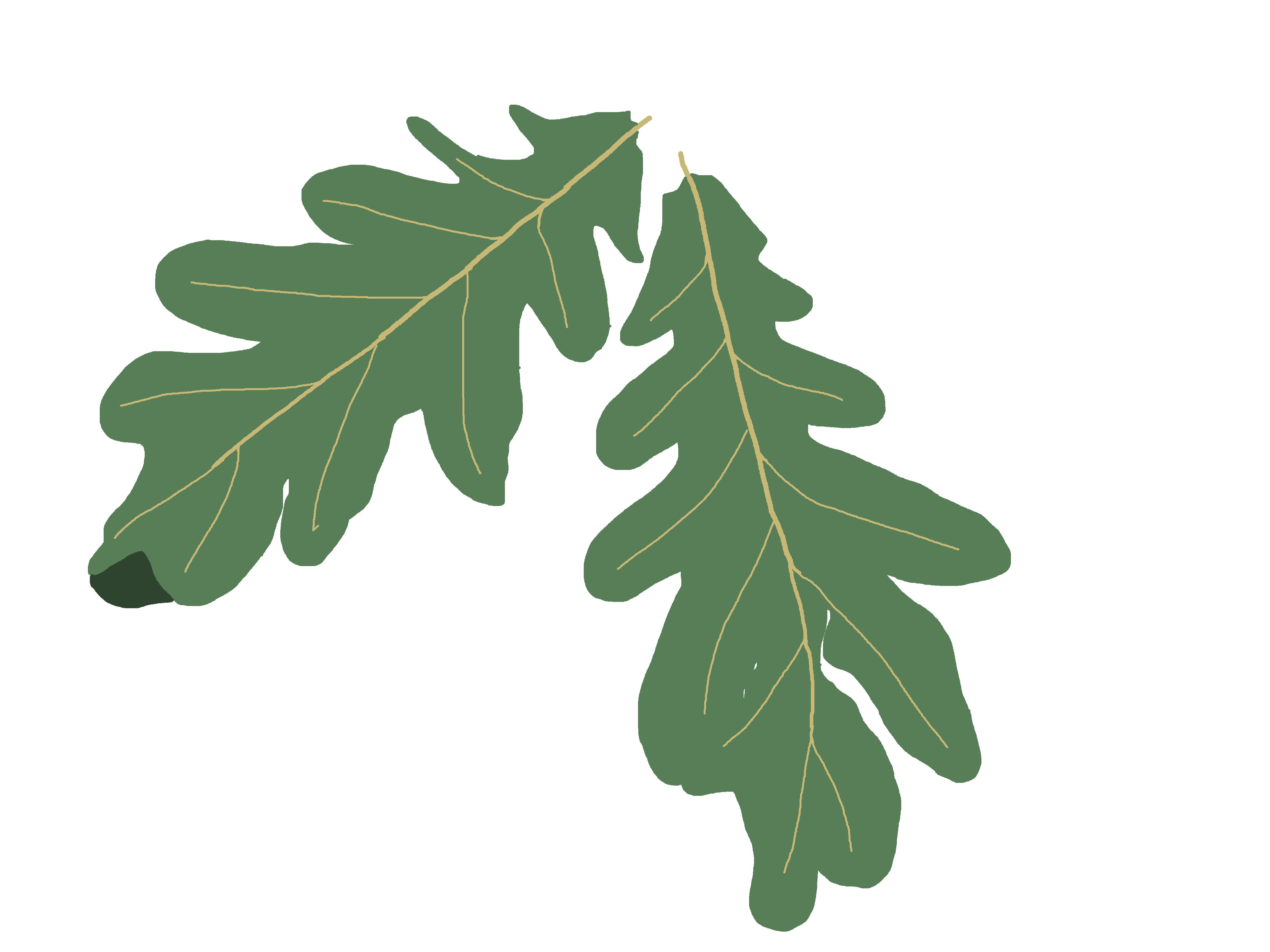 Oak Trees - FREE, subject to .