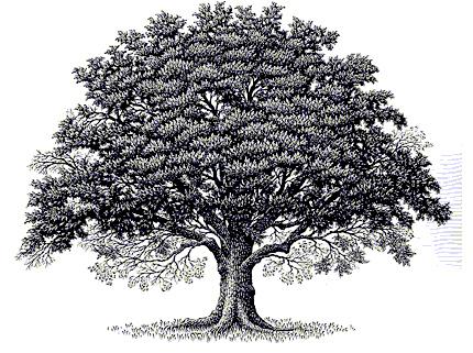 Oaktree Clip Art Flickr Photo Sharing