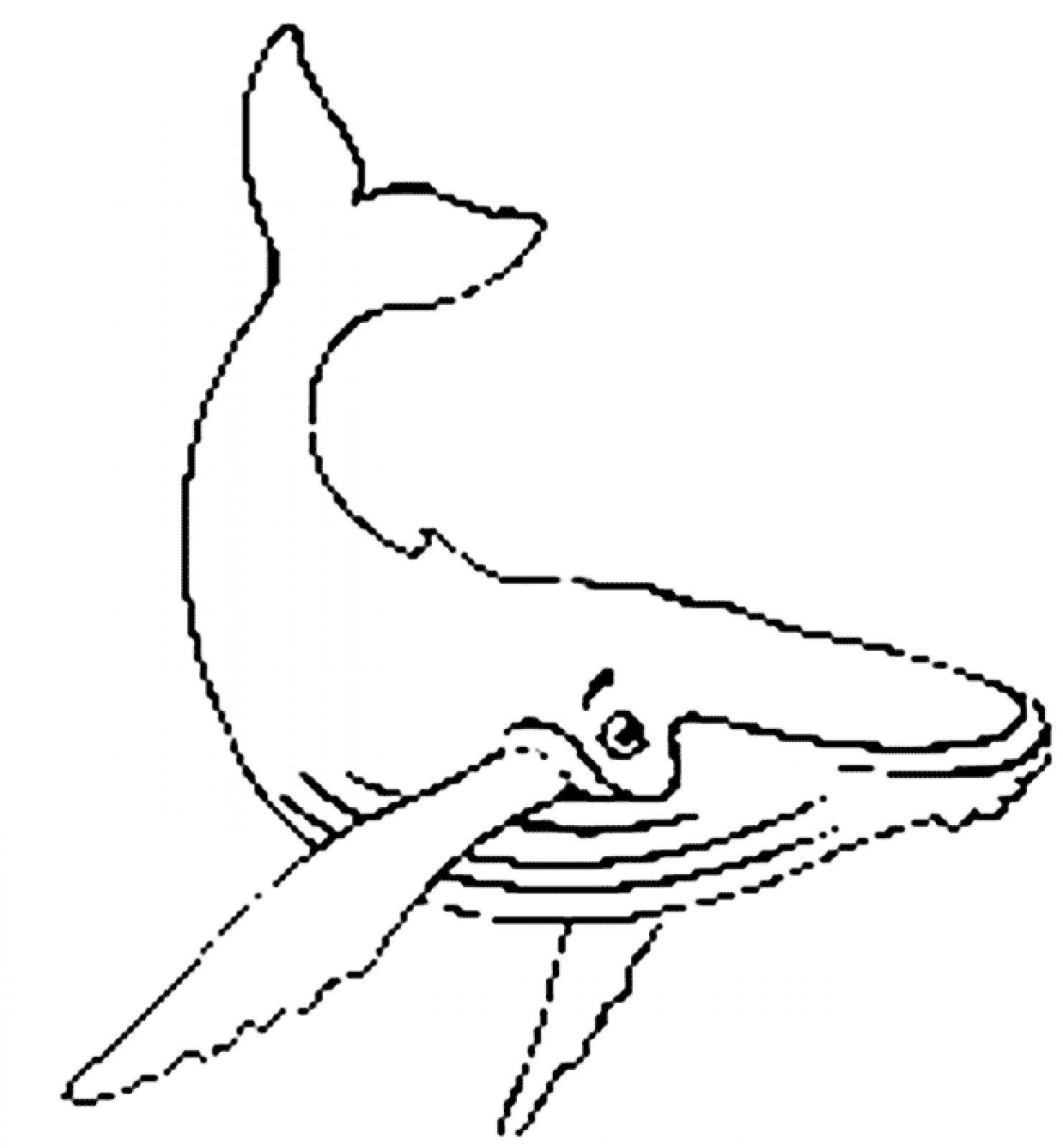 of humpback whale tails .-of humpback whale tails .-15