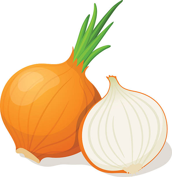 Onion isolated on white. Vector illustration vector art illustration