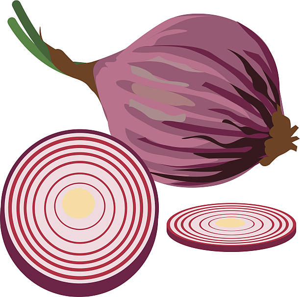 red onion vector art illustration