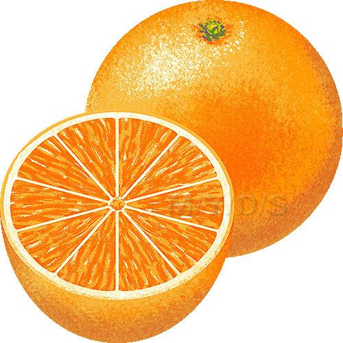 Orange Clipart-orange clipart-9
