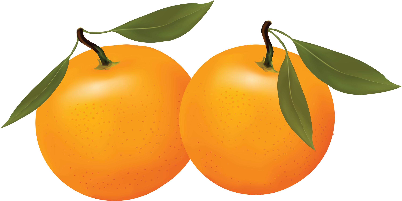 Orange Clipart-orange clipart-2