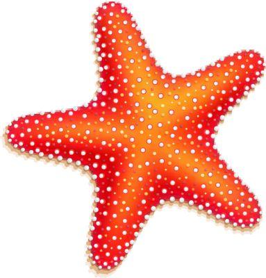 Orange Starfish - Free Clip .