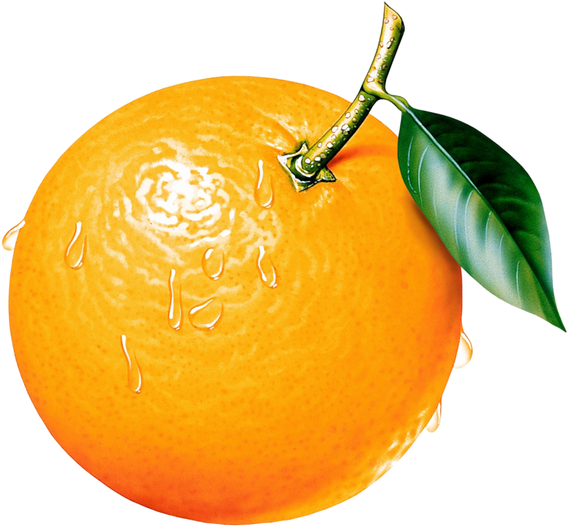 Orange Tree Clipart Free Clipart Images-Orange Tree Clipart Free Clipart Images-15