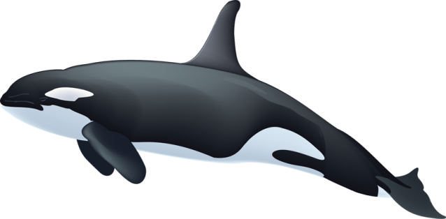 Orca Whale Clipart ... word