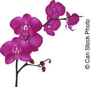 ... Orchid Branch, Isolated On White Background, Vector.