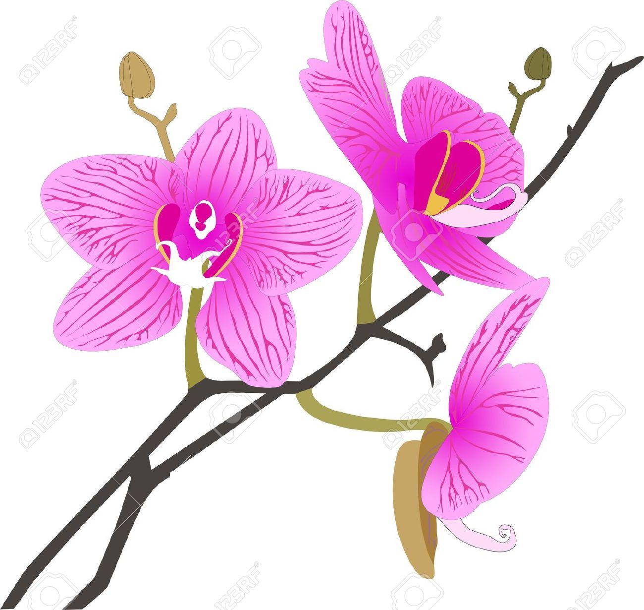 orchid flower clip art #10