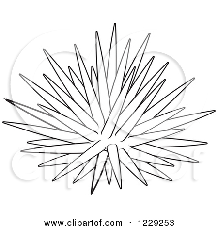 Outlined Sea Urchin by Alex Bannykh