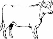Ox Clipart. Beef Steer Clipart