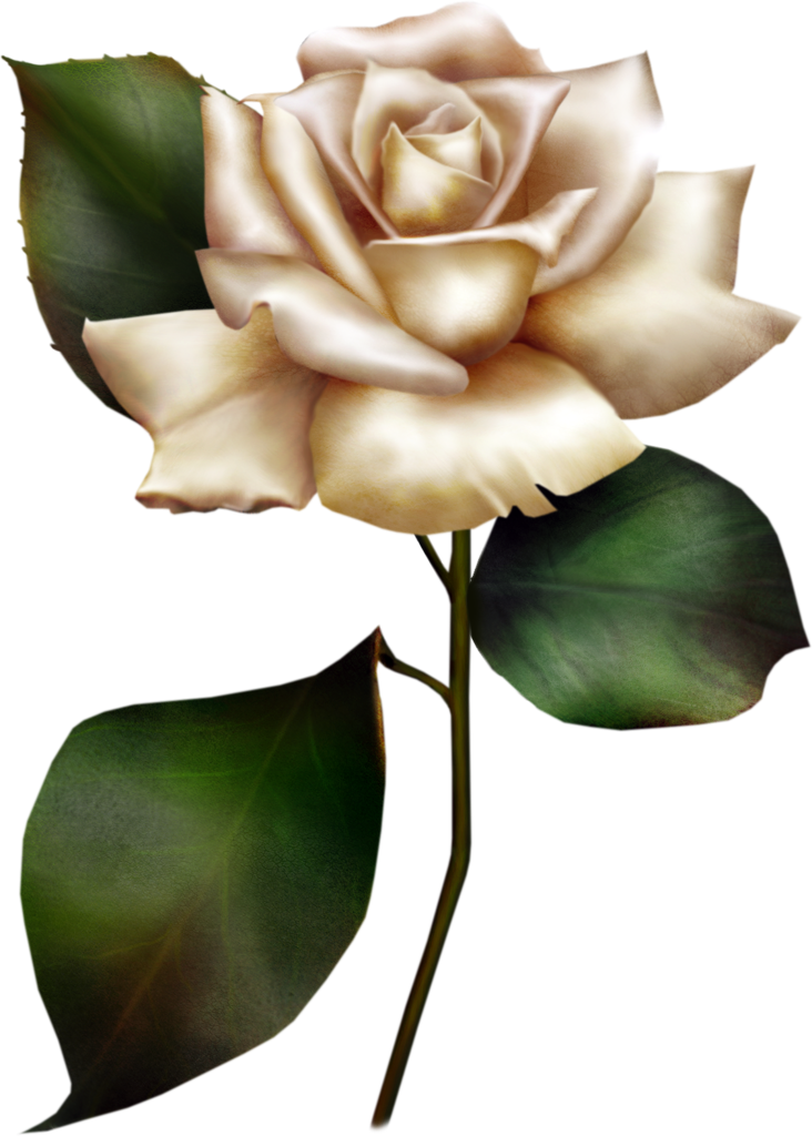 Painted White Rose Clipart-Painted White Rose Clipart-4