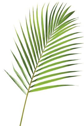 Palm Branches Clip Art