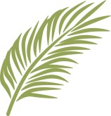 Palm Leaf Clipart Clipart Best