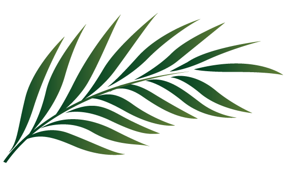 Palm Leaf Outline