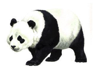 Panda head clipart free .-Panda head clipart free .-16