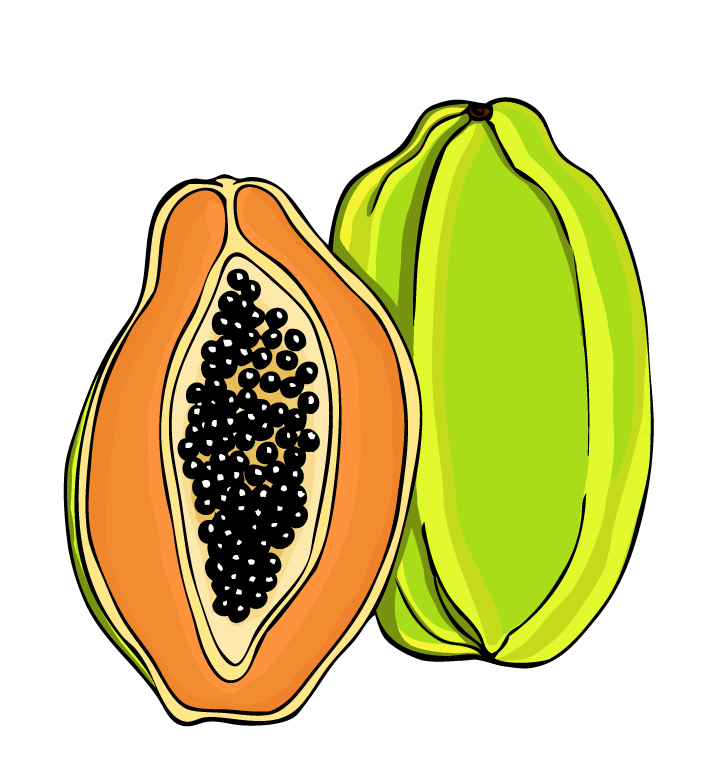 Papaya Clipart-Clipartlook.com-720