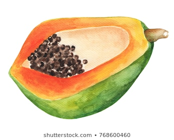 Papaya half by watercolor. Papaya watercolor illustration on white  background. Exotic fruit with green