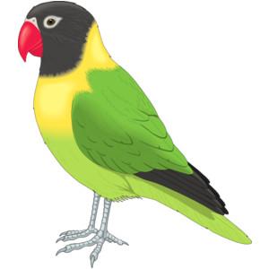 Parakeet Clip Art - Vector .-Parakeet clip art - vector .-6