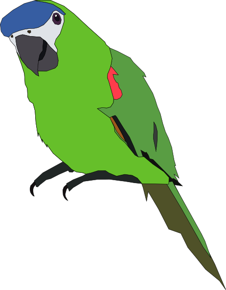 Parakeet Clipart-Parakeet Clipart-9