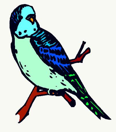 Parakeet Info Homepage-Parakeet Info Homepage-11