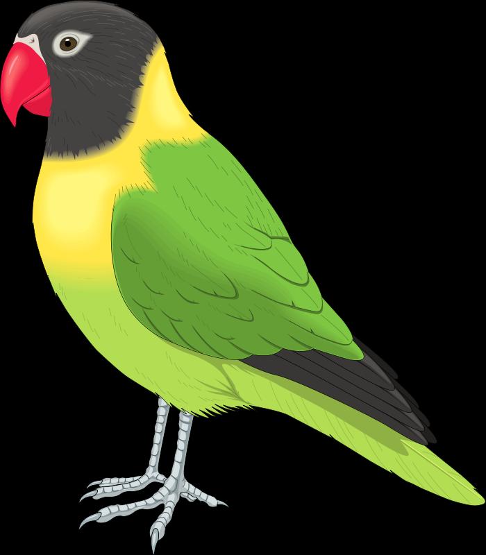 Parrot 20clipart