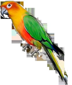 Parrot. Cute Parrot Clipart
