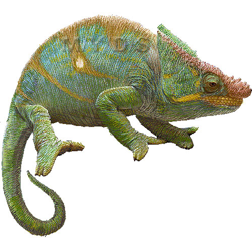 Parson S Chameleon Clipart Graphics Free Clip Art