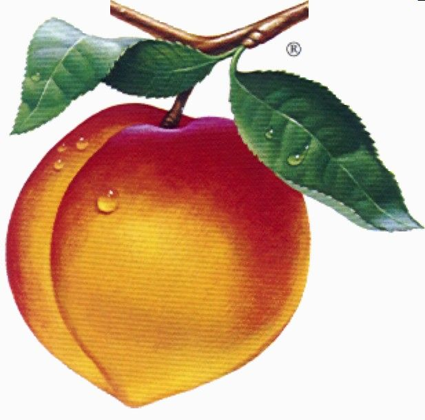 Peach clipart picture image