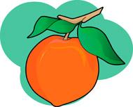 Peach Clipart Size: 61 Kb