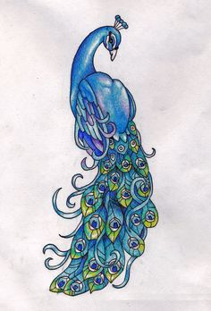 peacock clip art   Free .