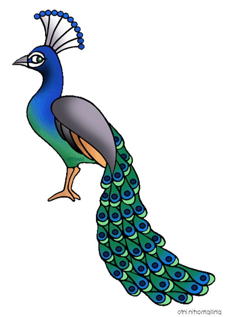 Peacock clipart free clipart images 3