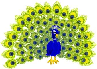 peacock-peacock-17