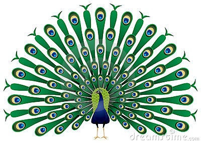 Peacock Stock Illustrations u2013 6,536 -Peacock Stock Illustrations u2013 6,536 Peacock Stock Illustrations, Vectors u0026amp; Clipart - Dreamstime-4