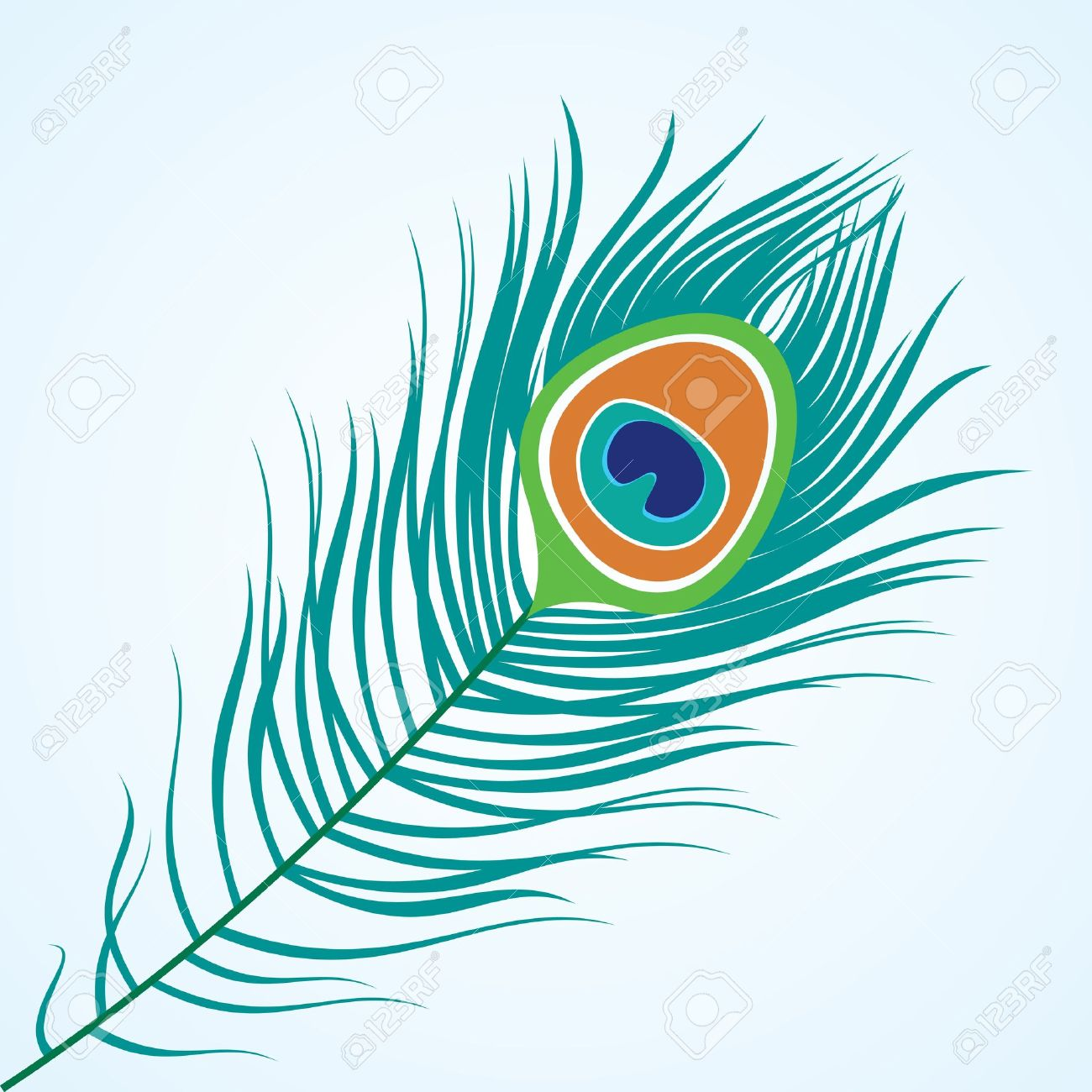 peacock: Vector isolated peacock feather Illustration