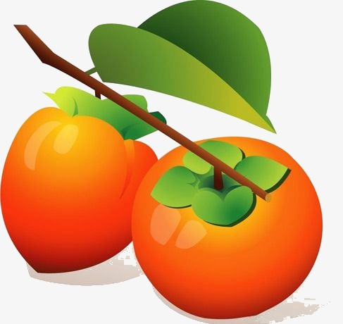 Clipart - Persimmon vector is